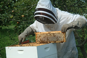 Bee NUC Italian & Carniolan Hybrid 5 Frame - Out of stock