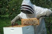 beekeepingevents