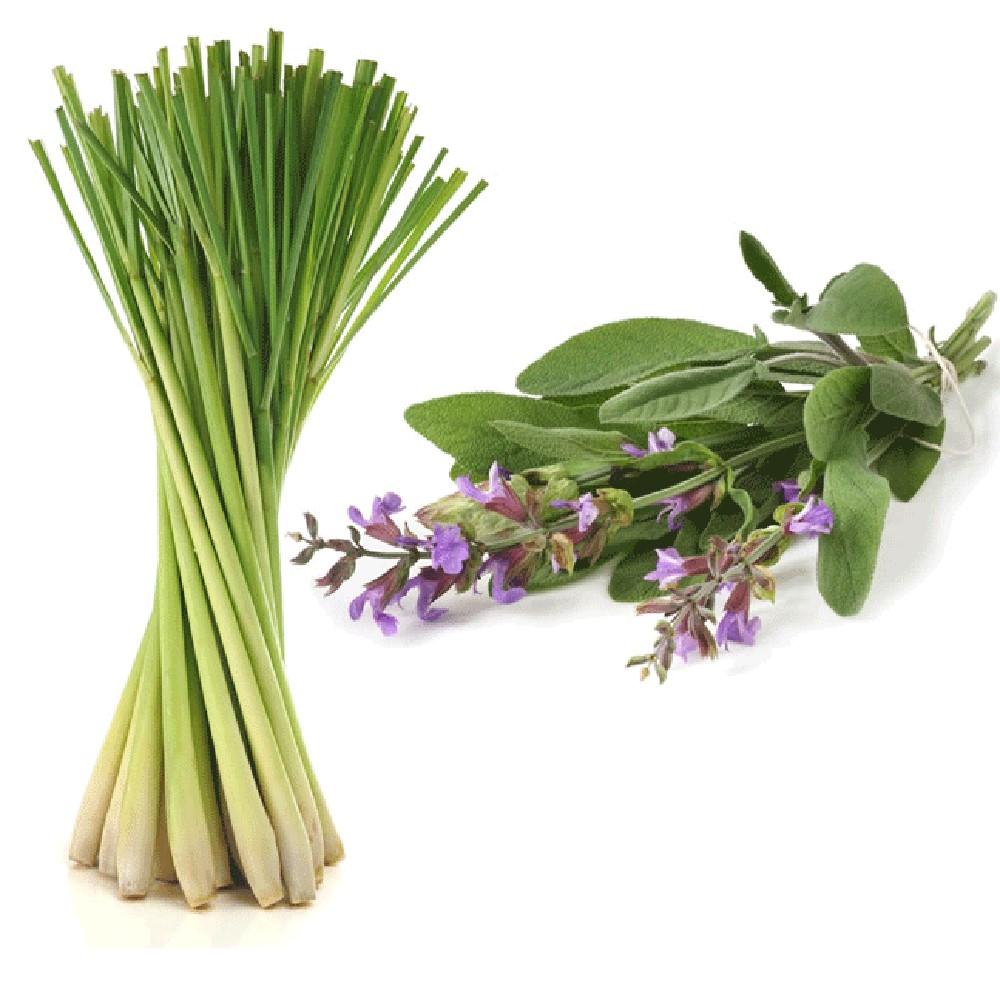 Soy Candle Lemongrass Sage 16 oz