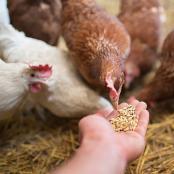 bay-state-chicken-treats-2-lb