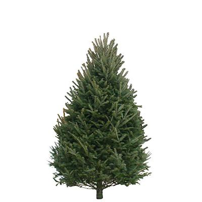 balsam-fir-christmas-tree-7-8