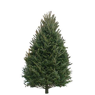 balsam-fir-christmas-tree-8-9