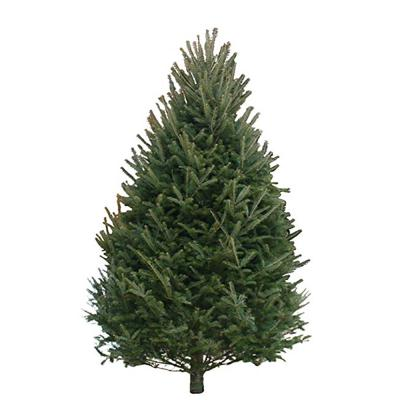 balsam-fir-christmas-tree-9-10