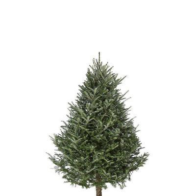 fraser-fir-christmas-tree-4-5