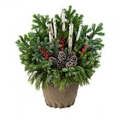 holiday-drop-in-planter-large