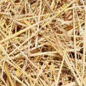 bag-of-straw