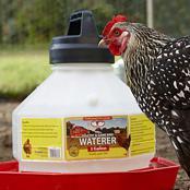 chick-kit-stage-2-plastic