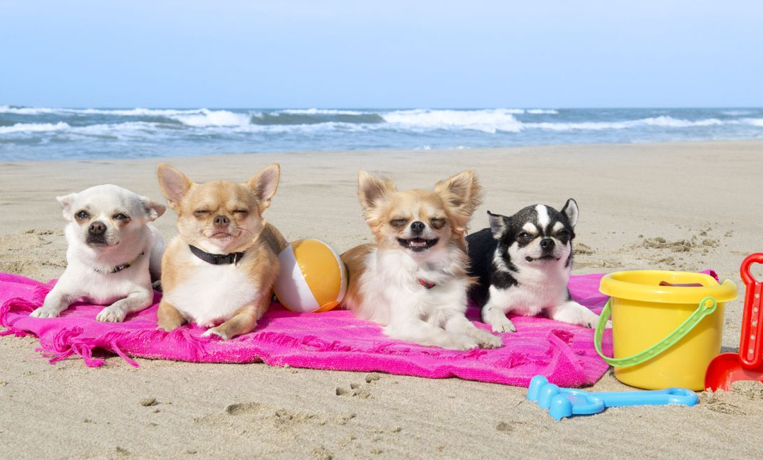 12 fun things to do with your dog before the end of summer