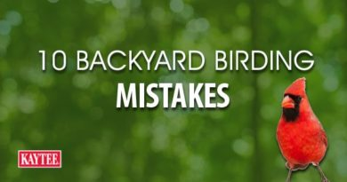 10 Common Backyard Birding Mistakes