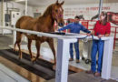 Science and Innovation Behind Purina® Horse Feed
