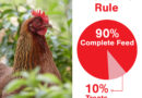 What Can Chickens Eat? Chicken Treats to Feed and Avoid